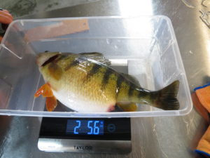 Birch Glen Lodge and Motel Monster Perch